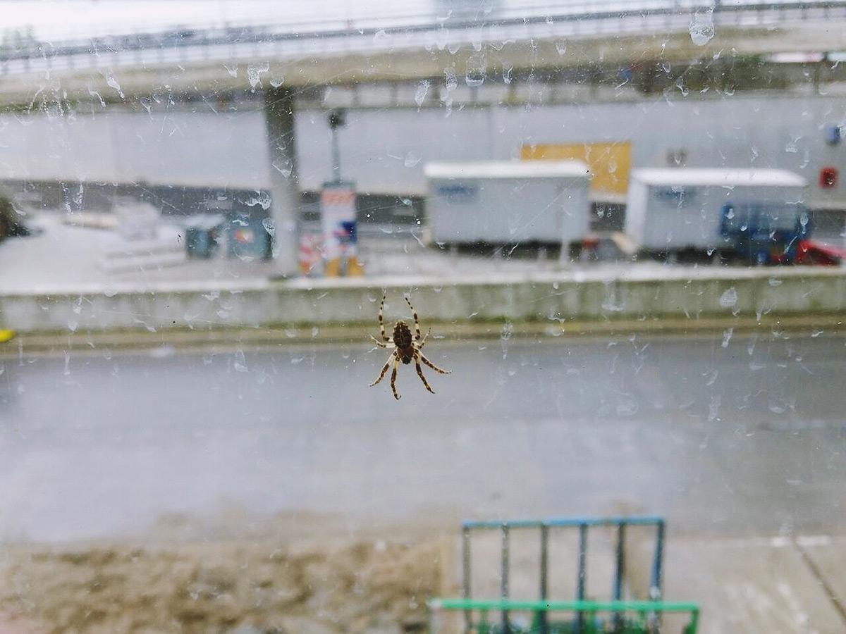 paris-day10_Spider-44