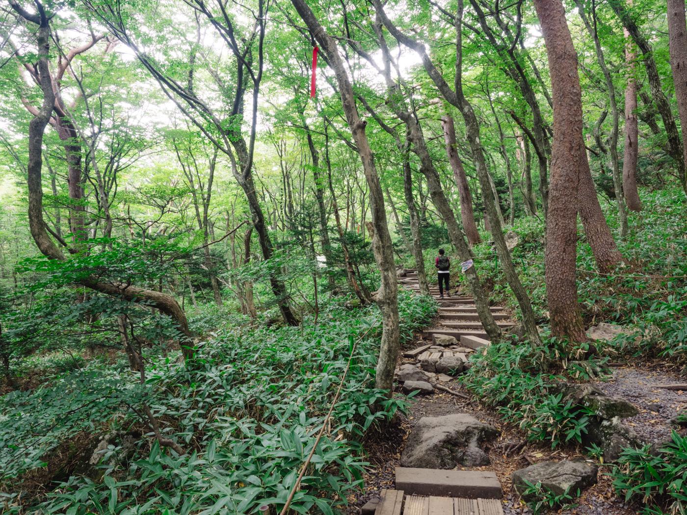 Korea - Mt Hallasan - Start of our climb