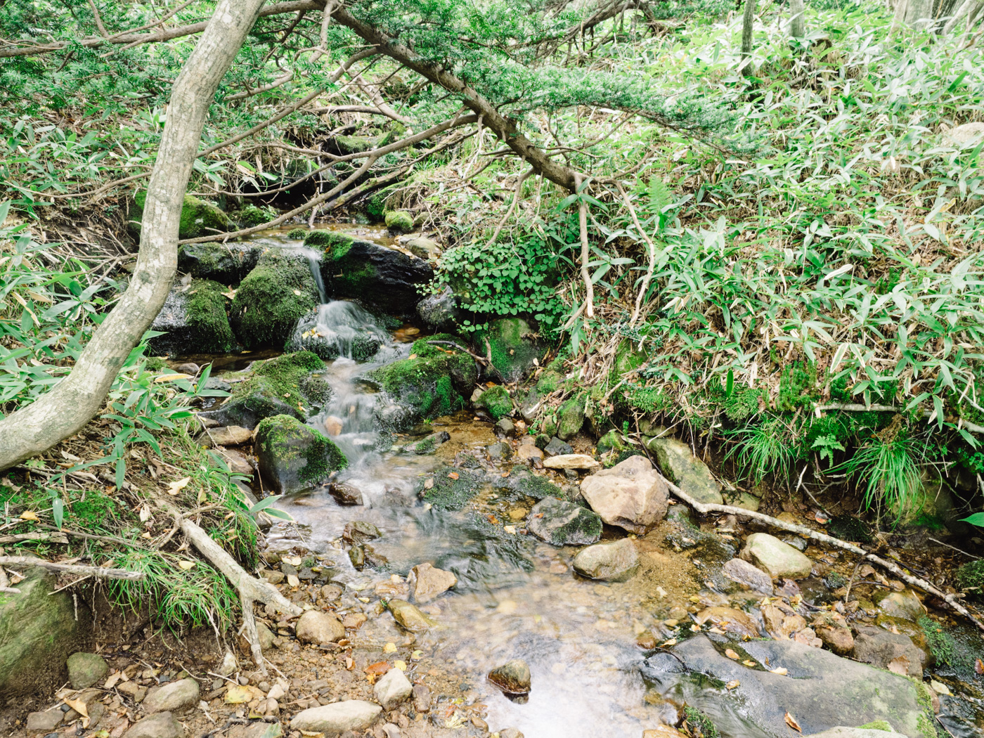Korea - Mt Hallasan - Tiny stream