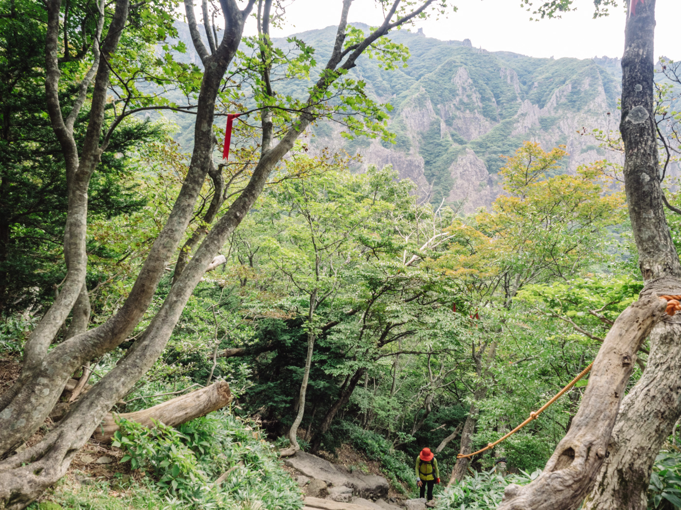 Korea - Mt Hallasan - Elderly lady climbing up the steep steps
