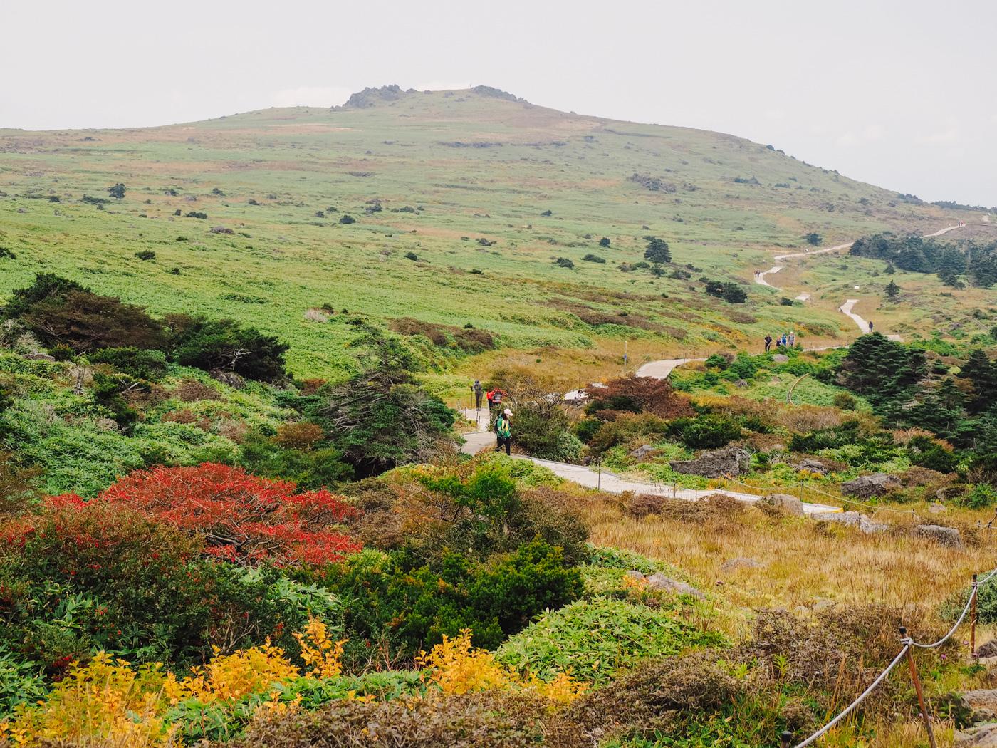 Korea - Mt Hallasan - Beautiful autumn colour flowers