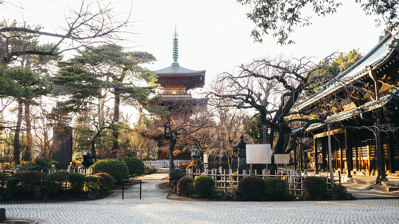 Japan - Gotokuji Temple - View of the shrine with bonsai looking trees