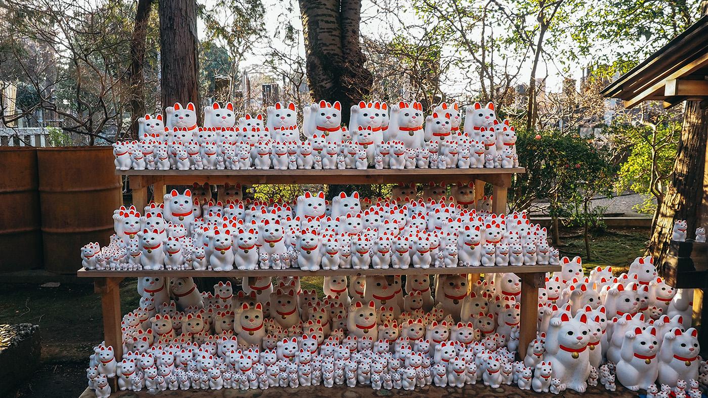 Japan - Gotokuji Temple - Neko close up