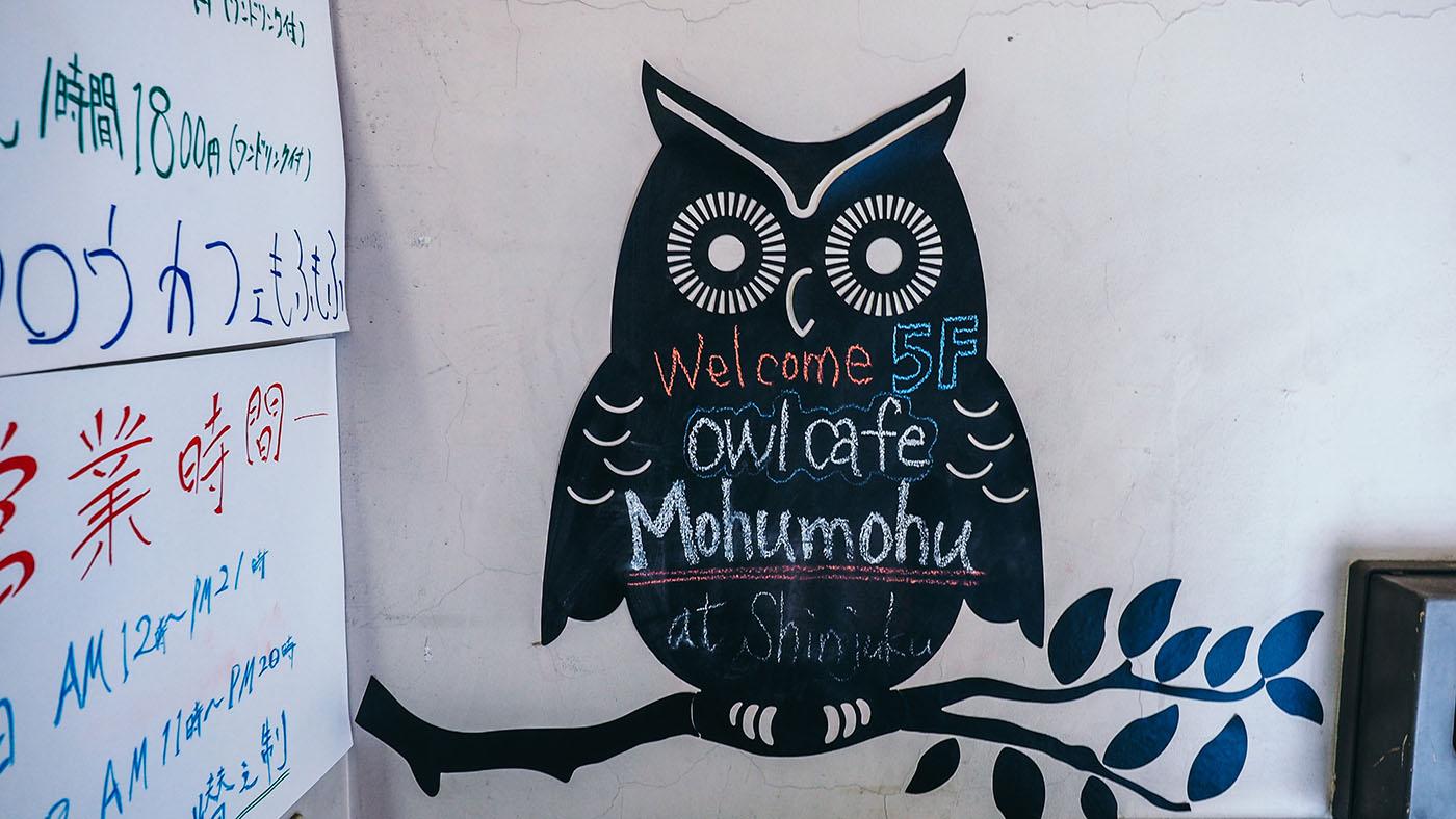 Japan - Shinjuku - Mohumohu Owl Cafe