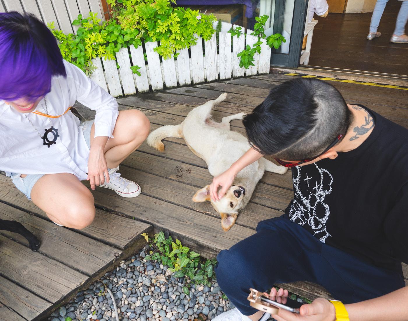 Taiwan - Qingjing - E & A playing with dogs