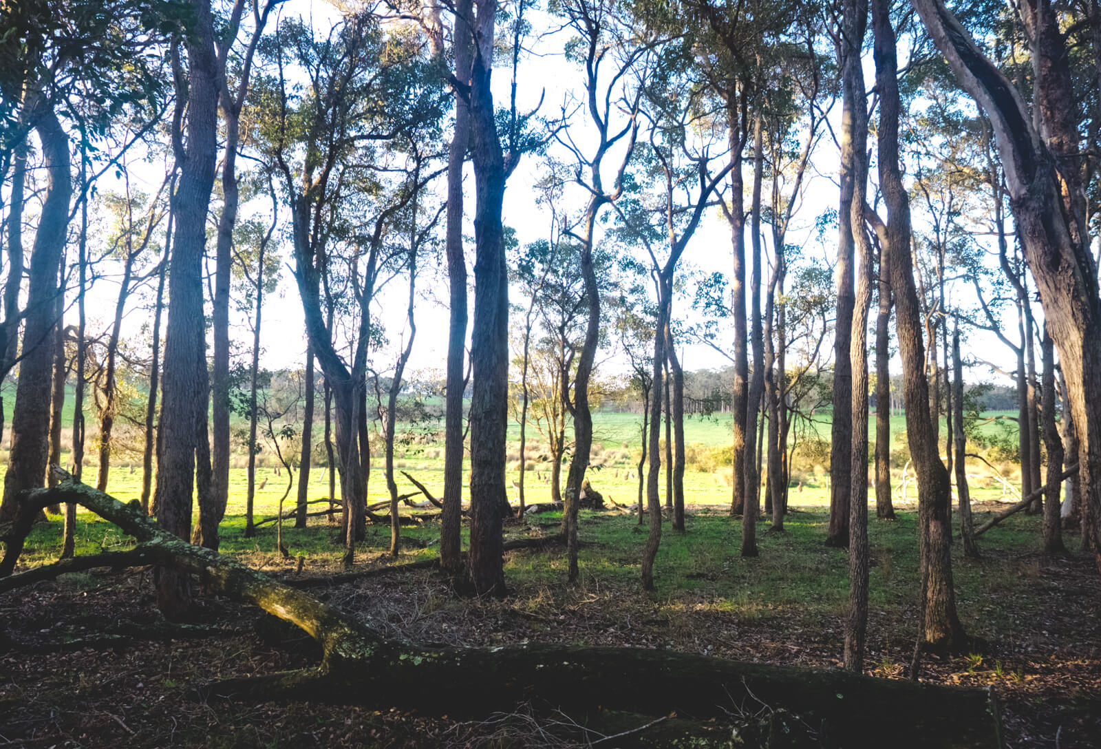 Perth, Australia - Jesters Flat - Twilight touring forest
