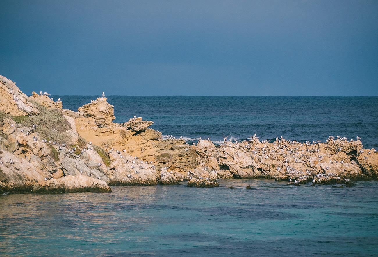 Australia - Rottnest Island - Little Salmon Bay seagulls