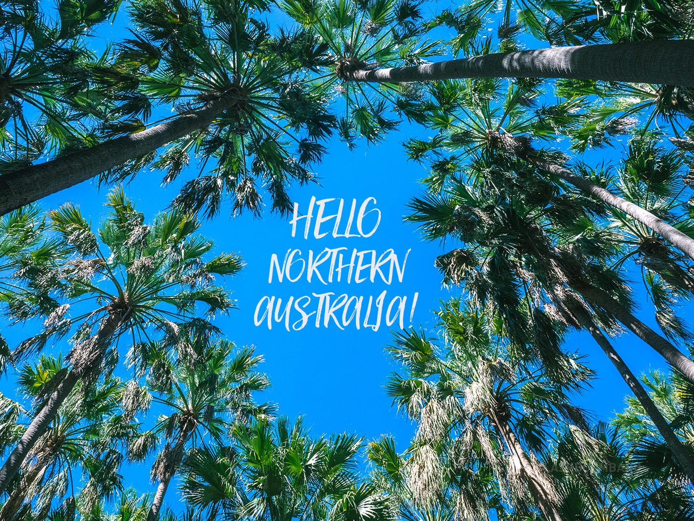 NT Australia - Elsey National Park - Palm Trees